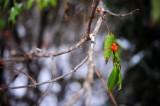 Wild Fruits 野果