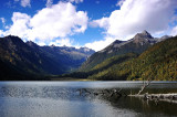 Logs and Lake, Wuxuhai 高原湖泊