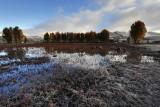 Frozen Grassland 蓋霜