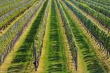 Rapheal Vineyards, Peconic