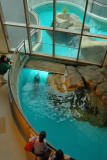 The Maritime Aquarium, South Norwalk