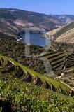 Paisagens do Douro