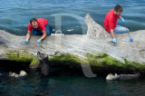 As Únicas 3 Lontras-Marinhas Existentes na Europa