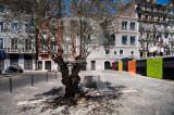 A Oliveira de Saramago