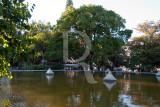 Painieira-barriguda (Árvore de Interesse Público)