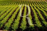 Torres Vedras - Rota do Vinho