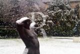 Um Torso na Neve