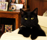 Our beloved LITTLE KITTY - March 2010 to October 10, 2011 - click on image to view