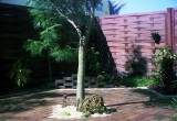 1974 - backyard of our townhouse at 7184 W. 2nd Court, Hialeah