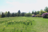 VIEW TO THE PINETUM