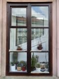 CACTI WINDOW