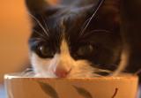 The Cat That Got The Cream