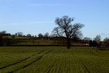 Fields Near Kirkham Abbey