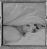 Polaroid Petie's Portfolio