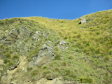 Tussock Country (1125L)