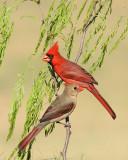 Birds -- South Texas
