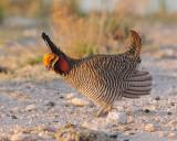 10th Annual Lesser Prairie Chicken Festival -- April 15-17, 2011