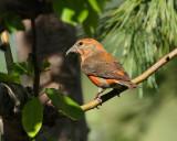 Birds -- May 2011