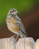 Birds -- July 2011