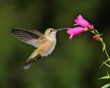 Birds -- Sept 2011