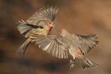 Birds -- November 2011