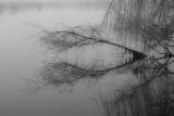 Lagoon Symmetry