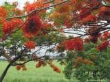 Impressions of Queensland