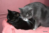 Mulle & Molly her kitty