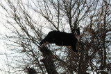 Felix in the apple tree