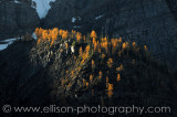 Autumn Larches in Valley of the Ten Peaks