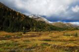 Autumn colours at Highwood Pass