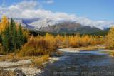 Autumn colours near Highwood Pass