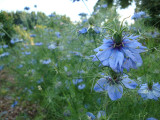 l-age-bleu Rosenpark 2012-07-21