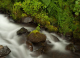 Water Garden: The Columbia River Gorge