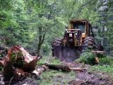 Petite forêt sauvage et fragile que deviens-tu devant ce monstre ?