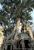 In Awe of Ancient Angkor