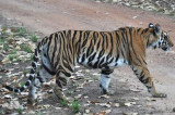 kanha_and_pench_national_parks