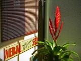 Bromeliad, Sign and Venetian Blind