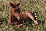 14 Foal and Fly