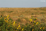 7833b- yellow flowers