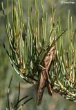 7885- Grasshopper in the Living Desert
