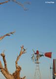 7623b- windmill at Silverton