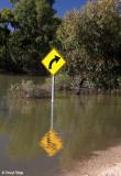 9248- Kinchega under water
