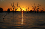 9264a- Menindee Lakes sunset