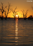 9264- Menindee Lakes sunset
