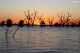 9272- Menindee Lakes sunset