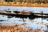 8274- new wetlands at Kulcurna