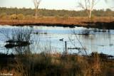 8276- new wetlands at Kulcurna
