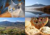 Autumn - Mount Beauty and Tawonga Gap