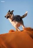 Rosie at the dunes